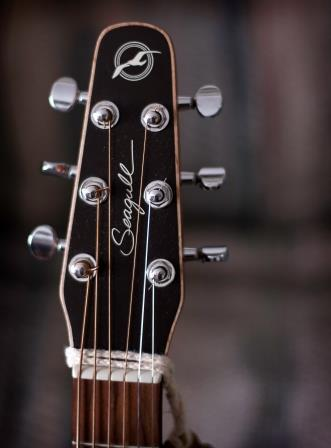 Seagull Guitar Tapered Headstock